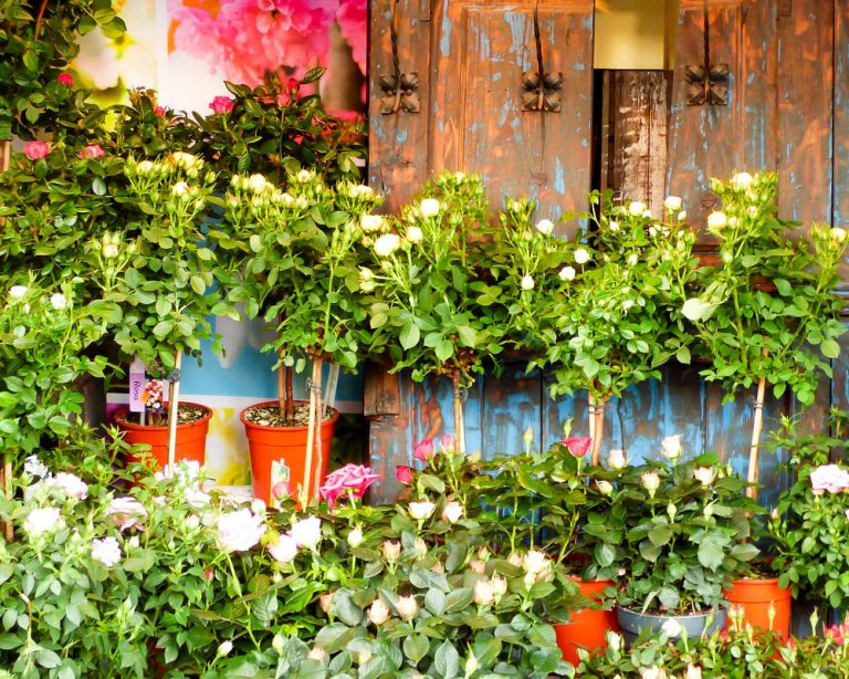 Bloemen winkel